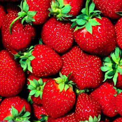 Maasikas