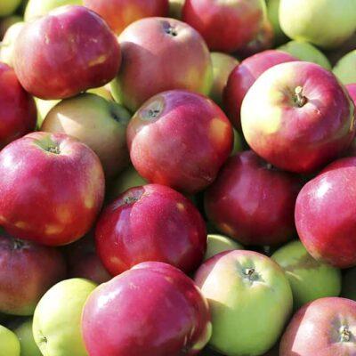 Õun Ženeva (värske)